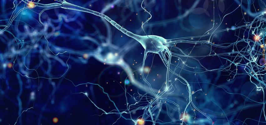 Современный взгляд на нейропластичность